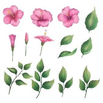 Kolekcja różowych kwiatów hibiskusa i malowanych liści