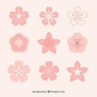 Kolekcja różowych kwiatów z różnych wzorów