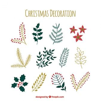 Kolekcja rysowane ręcznie roślin Boże Narodzenie