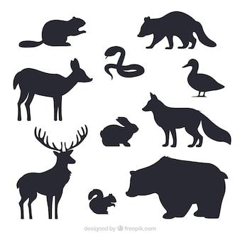 Kolekcja silhouettes zwierząt
