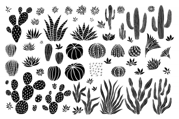 Kolekcja soczystych kaktusów.
