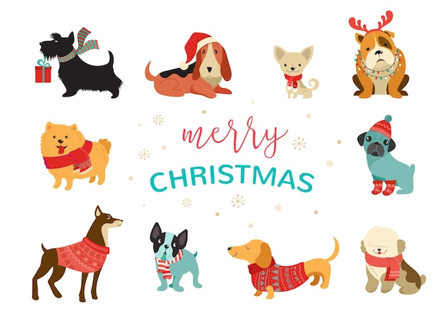 Kolekcja świątecznych psów, ilustracje wesołych świąt przedstawiające urocze zwierzaki z dodatkami, takimi jak dzianinowe czapki, swetry, szaliki