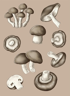 Kolekcja świeżych grzybów organicznych