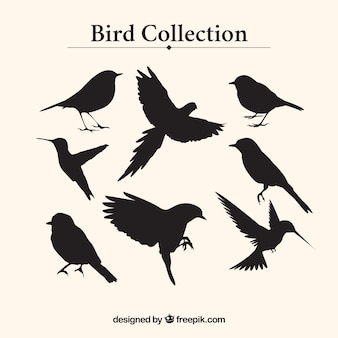 Kolekcja sylwetki ptaków