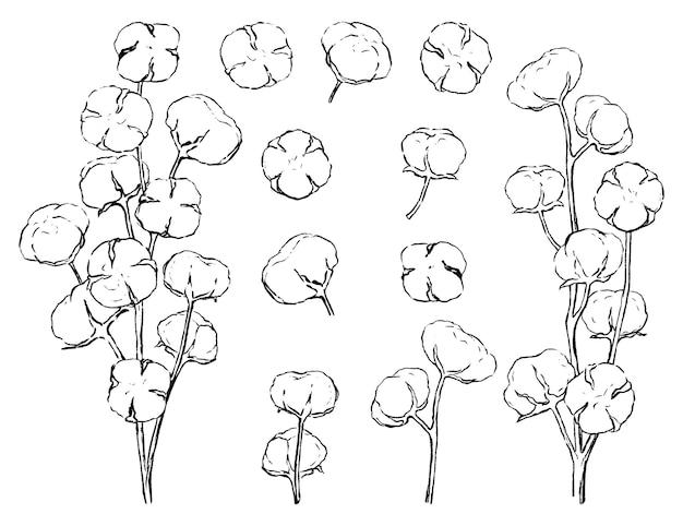 Kolekcja szkiców bawełnianych. zestaw kwitnących gałęzi bawełny. ręcznie rysowane ilustracji wektorowych. czarne rysunki na białym tle. delikatne elementy botaniczne do projektowania, wystroju, nadruków, kart.