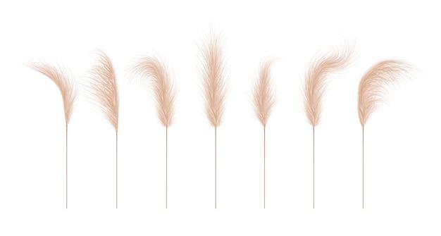 Kolekcja trawy pampasowej