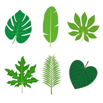 Kolekcja tropical leaves