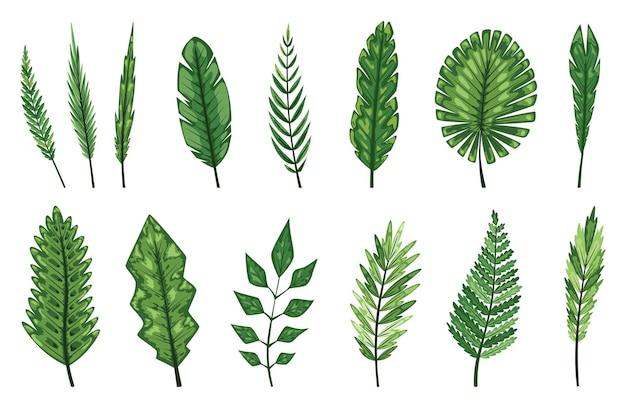 Kolekcja tropikalnych abstrakcyjnych zielonych liści na białym tle