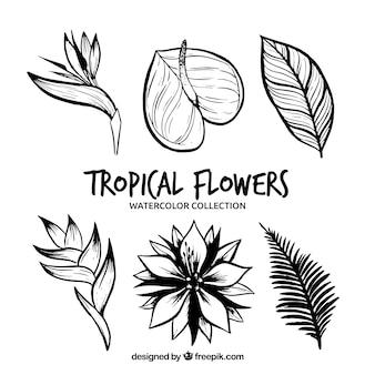 Kolekcja tropikalnych kwiatów w monolinach