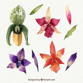 Kolekcja tropikalnych kwiatów w stylu przypominającym akwarele