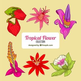 Kolekcja tropikalnych kwiatów w stylu wyciągnąć rękę