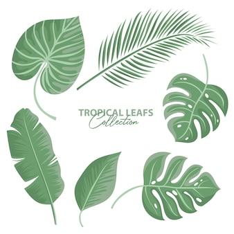 Kolekcja tropikalnych liści na białym tle