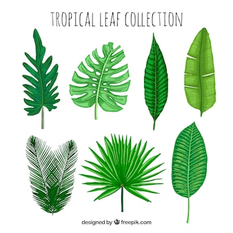 Kolekcja tropikalnych liści w stylu wyciągnąć rękę