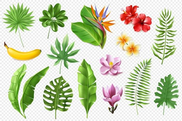 Kolekcja tropikalnych liści.