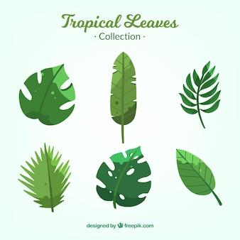 Kolekcja tropikalnych liści