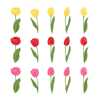 Kolekcja tulipanów o różnych kształtach i kolorach.