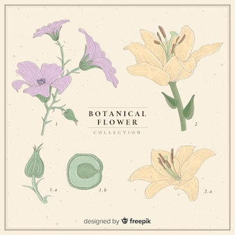 Kolekcja vintage kwiatów