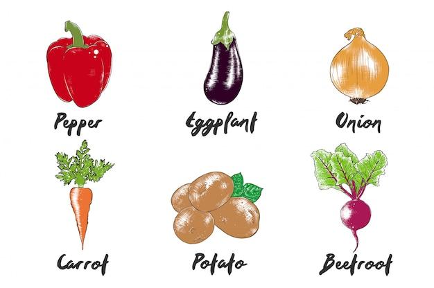 Kolekcja warzyw ekologicznych w grawerowanym stylu