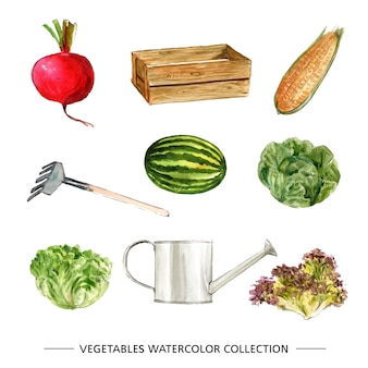 Kolekcja warzyw na białym tle akwarela