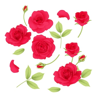 Kolekcja wektor czerwone róże