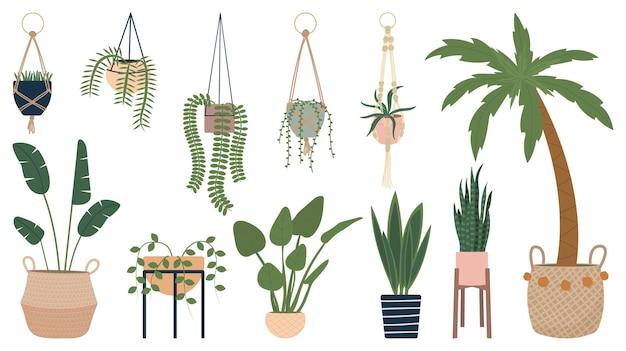 Kolekcja wektorów domowych roślin doniczkowych