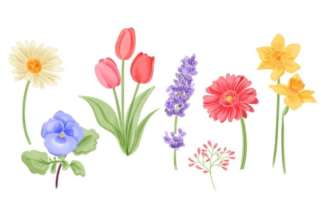 Kolekcja wiosennych kwiatów akwarela