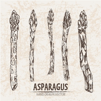 Kolekcja wyciągnięta ręcznie z aspargus