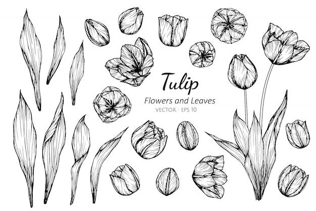 Kolekcja zestaw kwiatów tulipanów