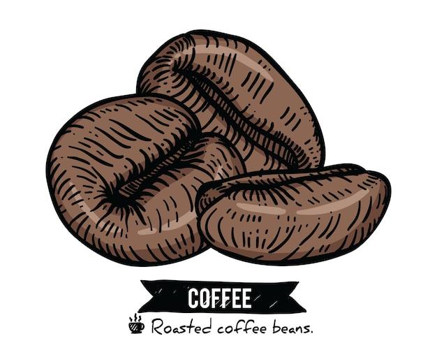 Kolekcja ziaren kawy