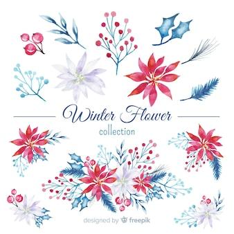 Kolekcja zimowy kwiat akwarela