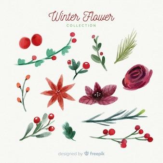 Kolekcja zimowych kwiatów akwarela