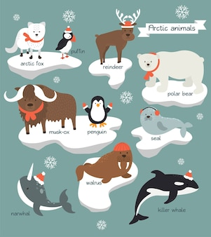 Kolekcja zwierząt arktycznych noszących ubrania świąteczne