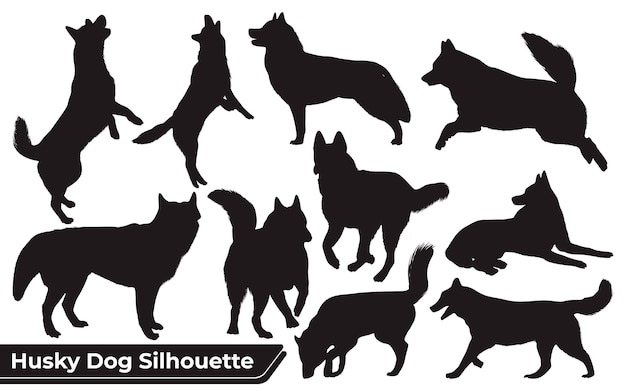 Kolekcja zwierząt husky dog w różnych pozycjach
