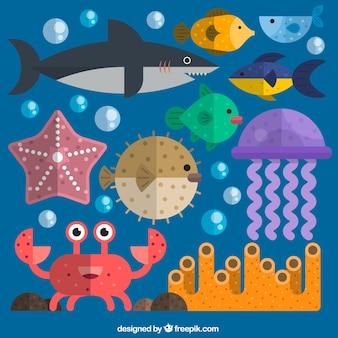 Kolekcja zwierząt marine