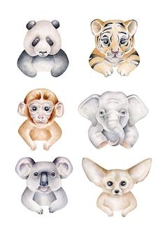 Kolekcja zwierząt. słoń, tygrys, panda, małpa, koala, lis