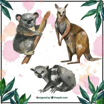 Kolekcja zwierzęta australijskie
