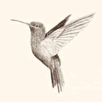 Koliber macha skrzydłami i leci. ołówkiem rysunek szkic na beżowym tle.