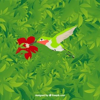 Kolibry z czerwonym kwiatem