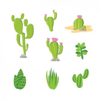 Kolorowa kolekcja kaktusów