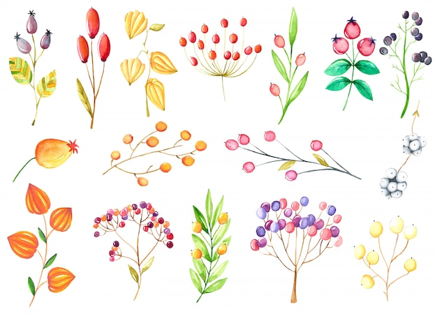 Kolorowa kolekcja ręcznie rysowanego dzikiej róży jesienią