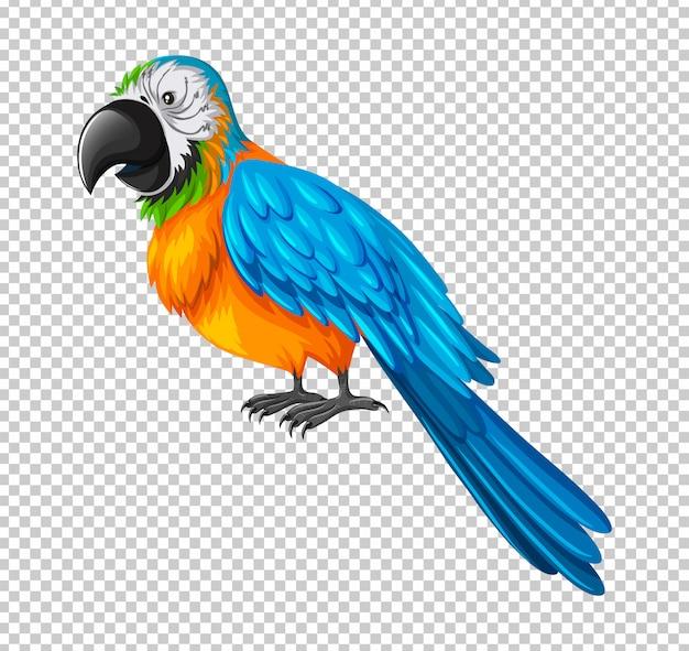 Kolorowa papuga na przezroczystym