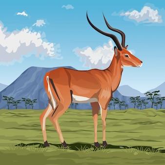 Kolorowa scena afrykański krajobraz ze stojącą gazelą