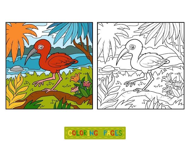 Kolorowanka dla dzieci, ibis szkarłatny i tło