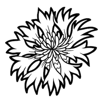 Kolorowanka dla dzieci, kwiat chaber