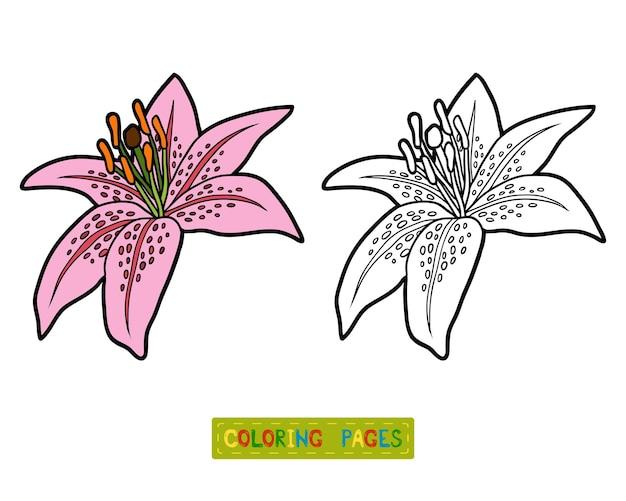 Kolorowanka dla dzieci, kwiat lily