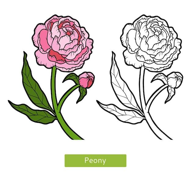 Kolorowanka dla dzieci, kwiat piwonia