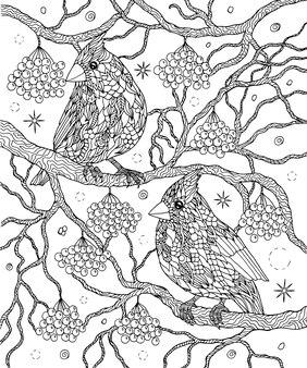 Kolorowanka ptaki i jagody północni kardynałowie