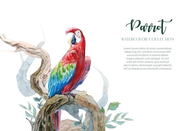 Kolorowe akwarele papugi z zestawem zakrzywionych gałązek w czystym designie.