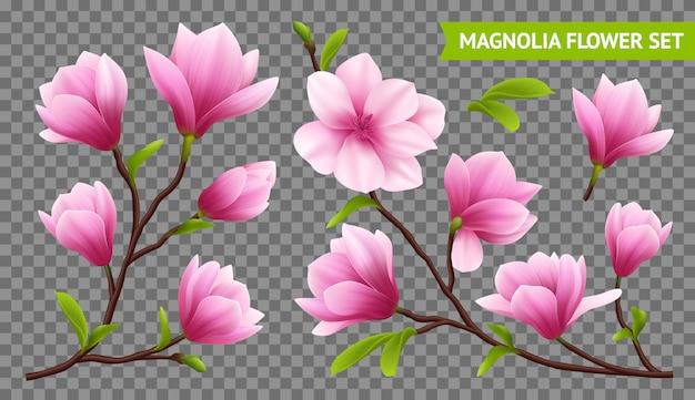 Kolorowe i na białym tle realistyczne przezroczyste ikony magnolii kwiat zestaw z gałęzi na przezroczystym