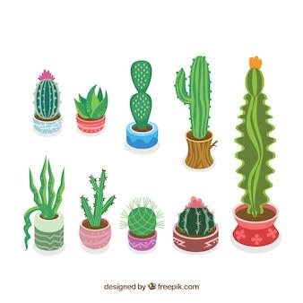 Kolorowe kolekcji kaktusów